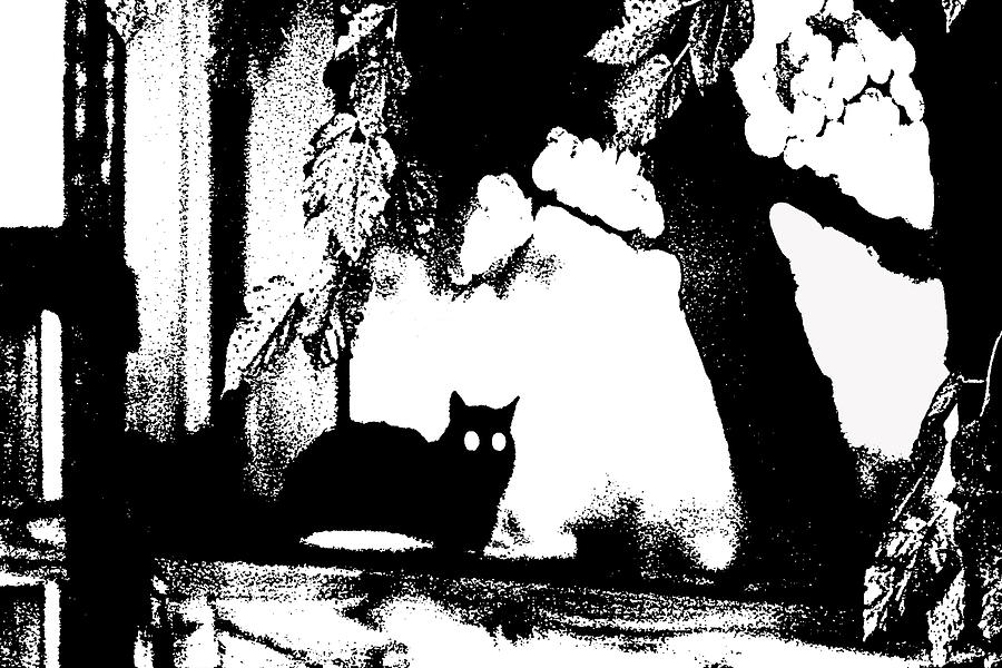 Abstract Photograph - Black Cat by Holly Morris