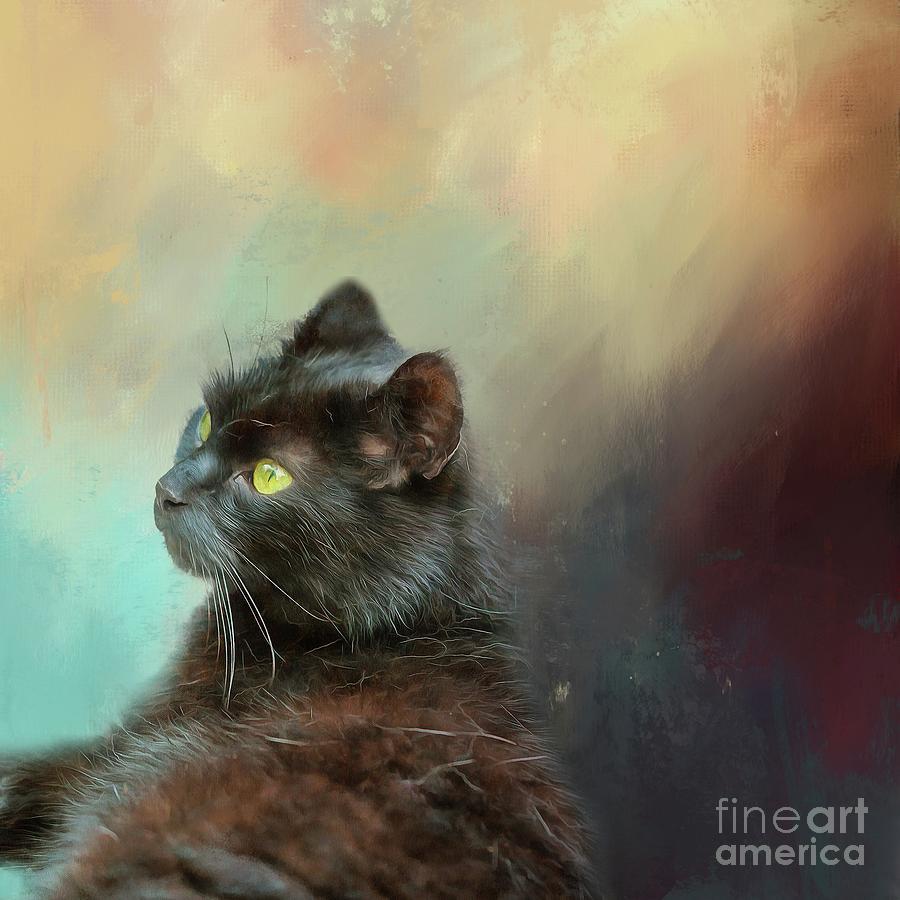 Black Cat Resting by Eva Lechner
