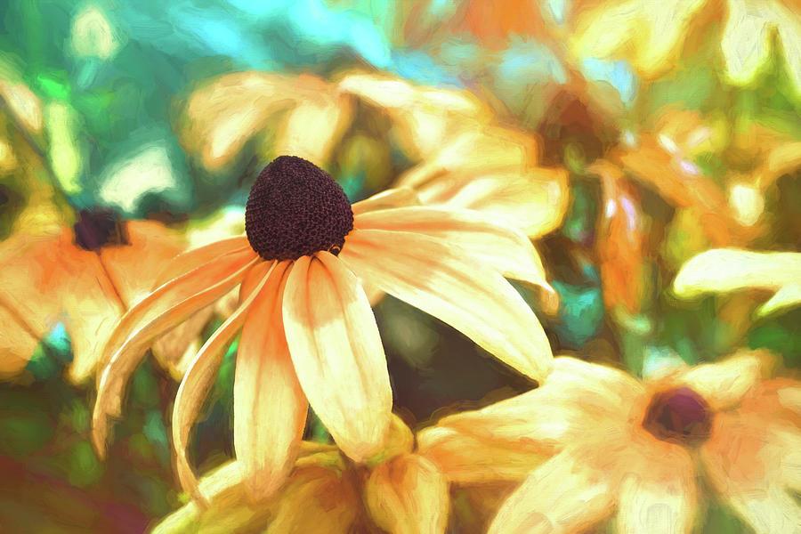 Black Eyed Susan Photograph