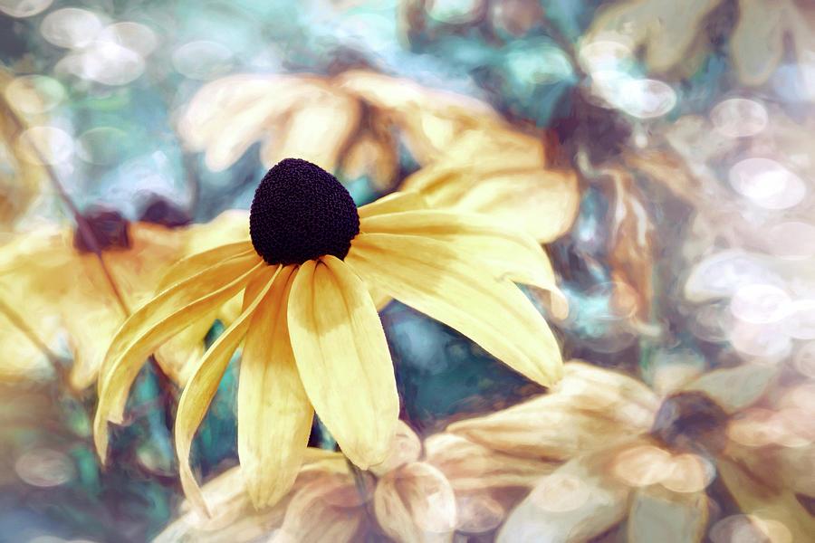 Black Eyed Susan Liquid Lemons Photograph