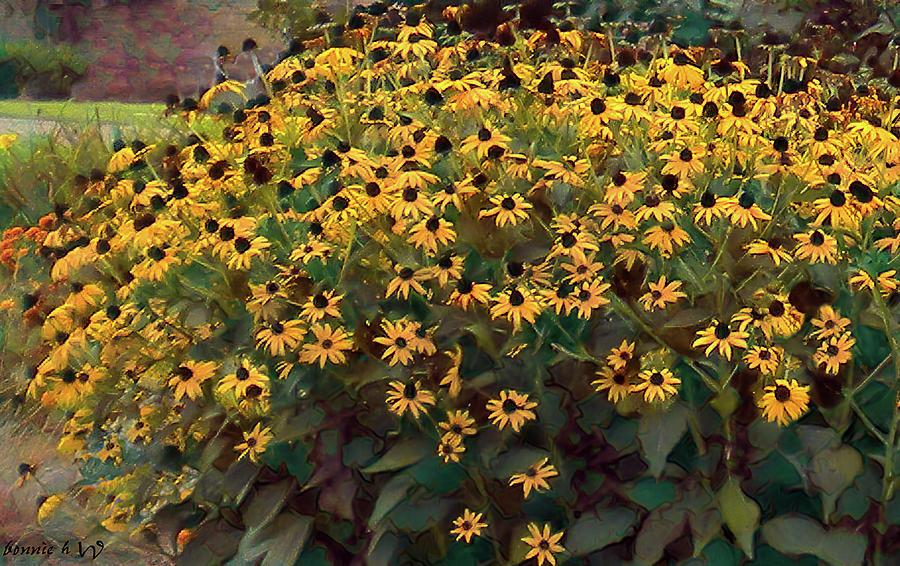 Black Eyed Susan wildflower by Bonnie Willis