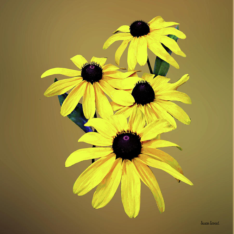 Black-Eyed Susans in a Row by Susan Savad