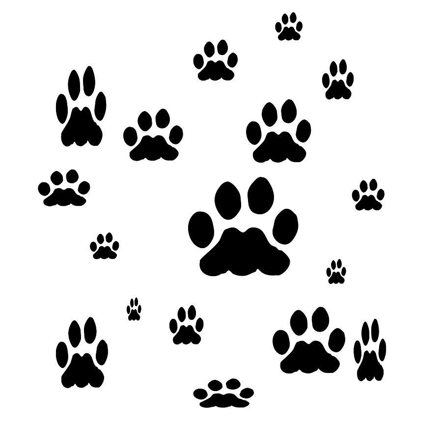 Black Pet Paw Prints by Kathy K McClellan