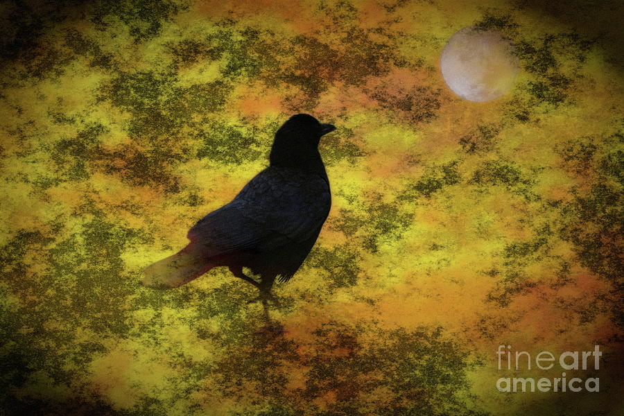 Black Raven Photograph - Black Raven Staring At The Moon Digital Art by Colleen Cornelius