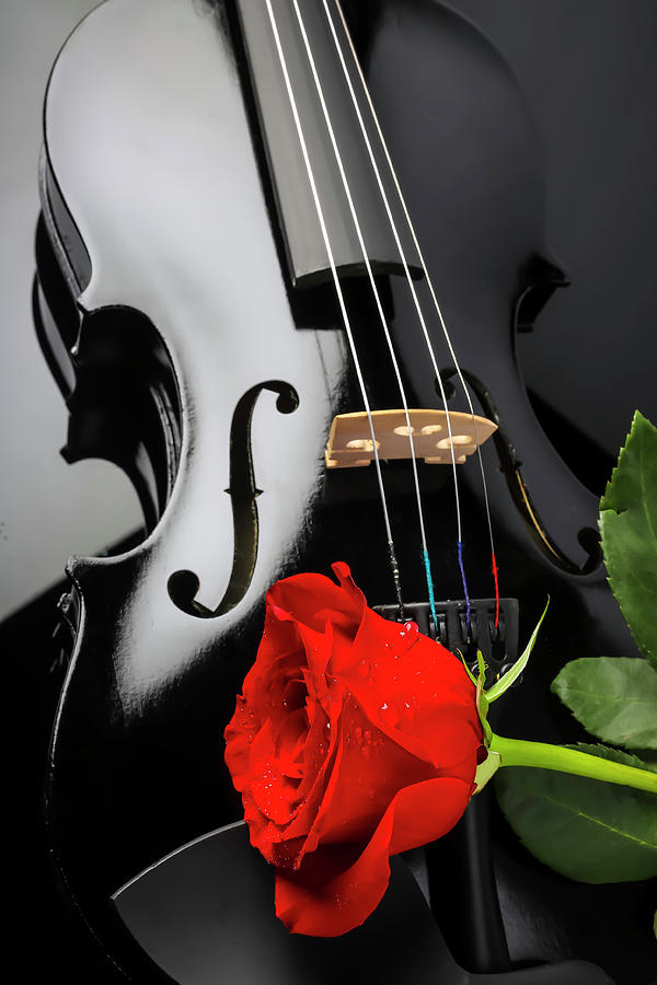 Black Violin And Red Rose by Garry Gay
