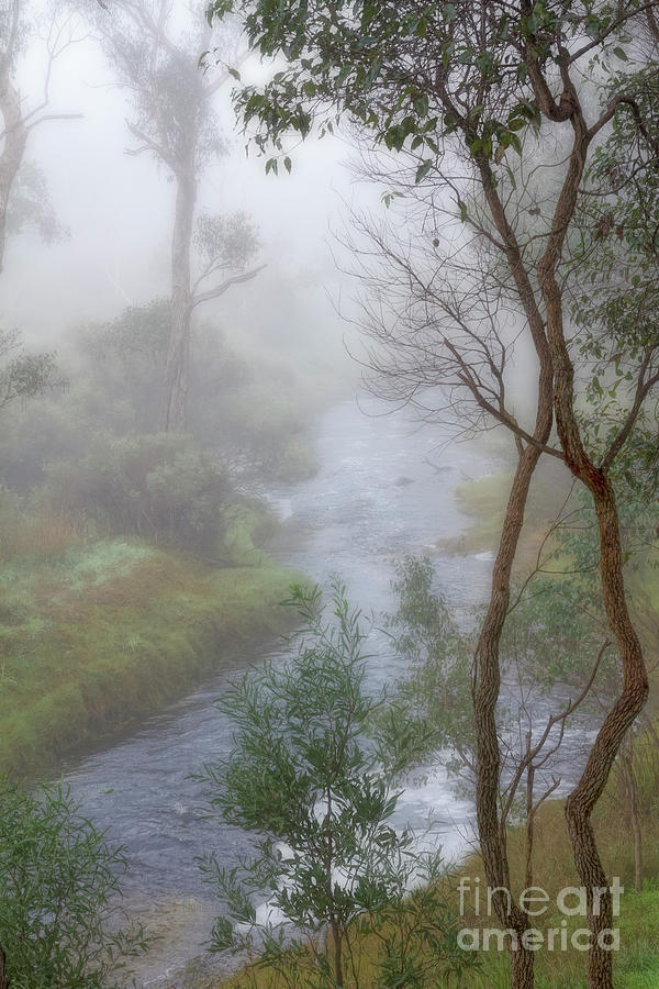 Blackwood Misty Morning by Elaine Teague