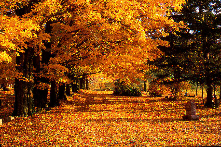 Fall Photograph - Blazing Autumn Oaks by Roger Soule