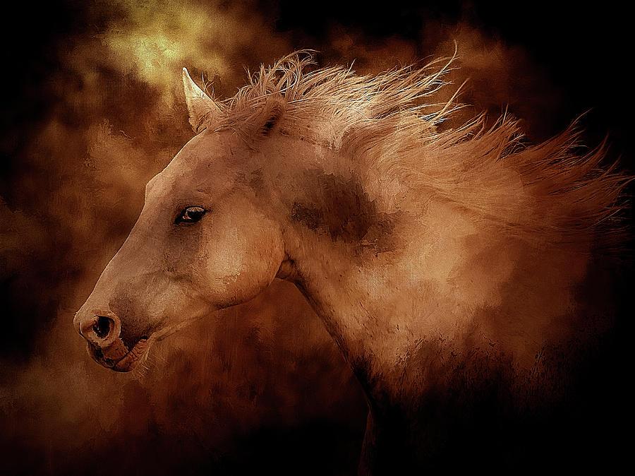 Blazing Fire Horse Photograph