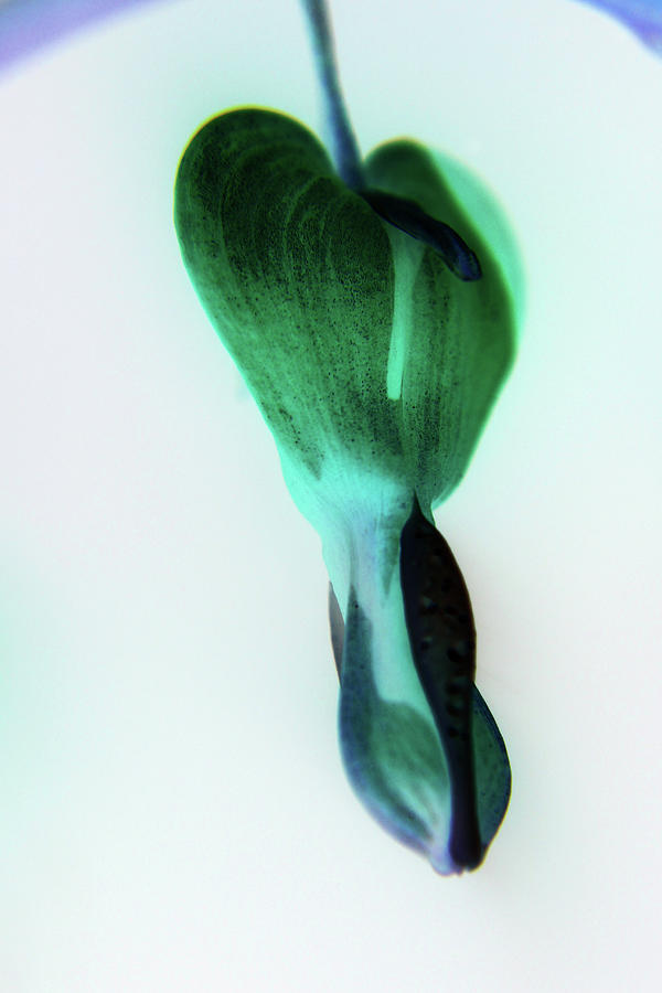Abstract Photograph - Bleeding Blue And Green by Holly Morris