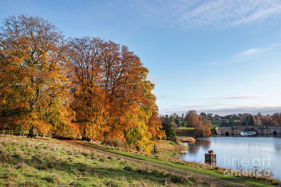 Blenheim Great Park in Autumn by Tim Gainey
