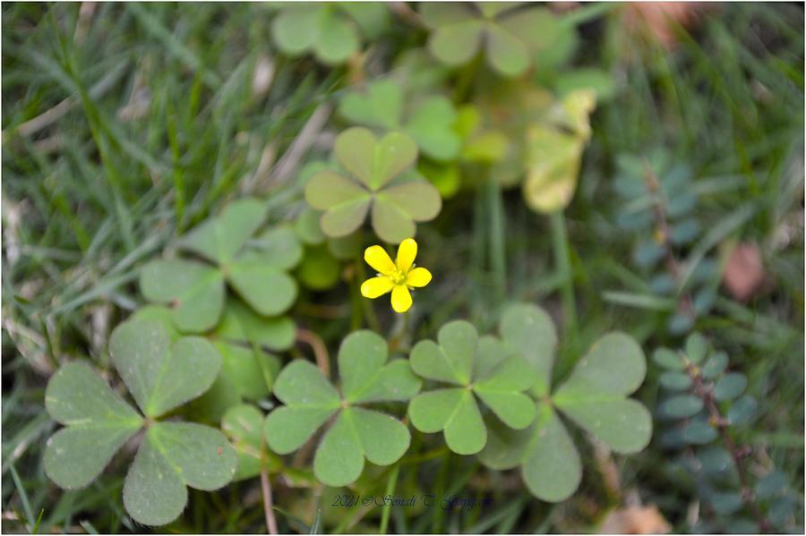 Blooming Petite Photograph