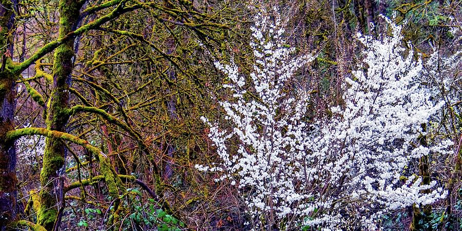 Blooming Tree Photograph