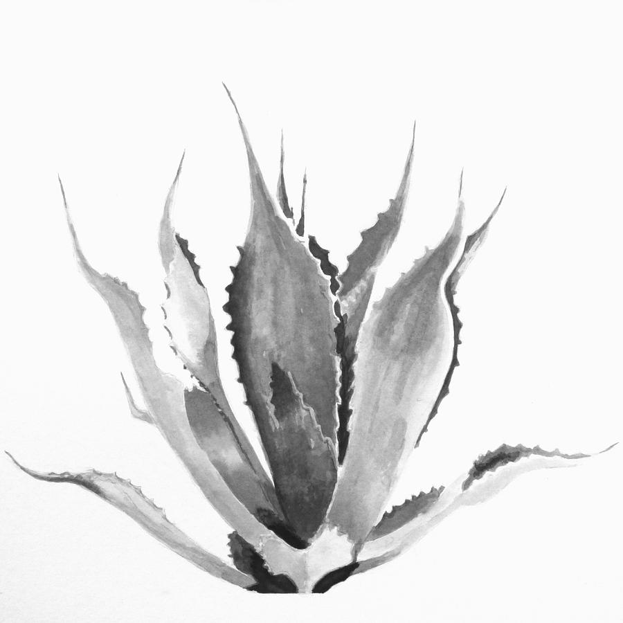 Blue Agave Drawing