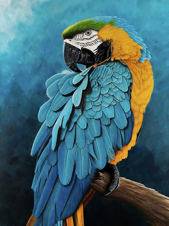 blue-and-gold-macaw-debra-dickson.jpg