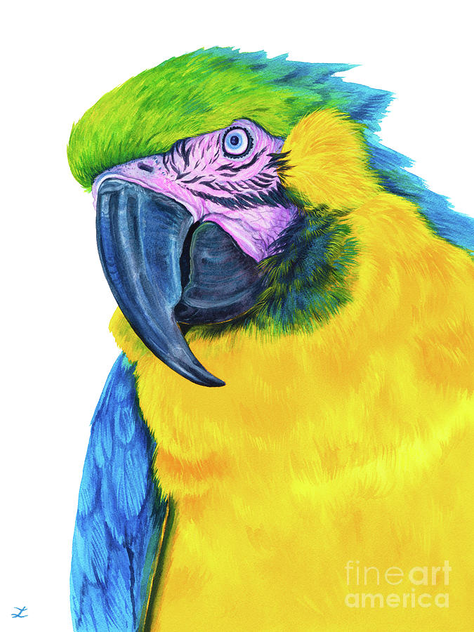 Blue-and-yellow Macaw Painting