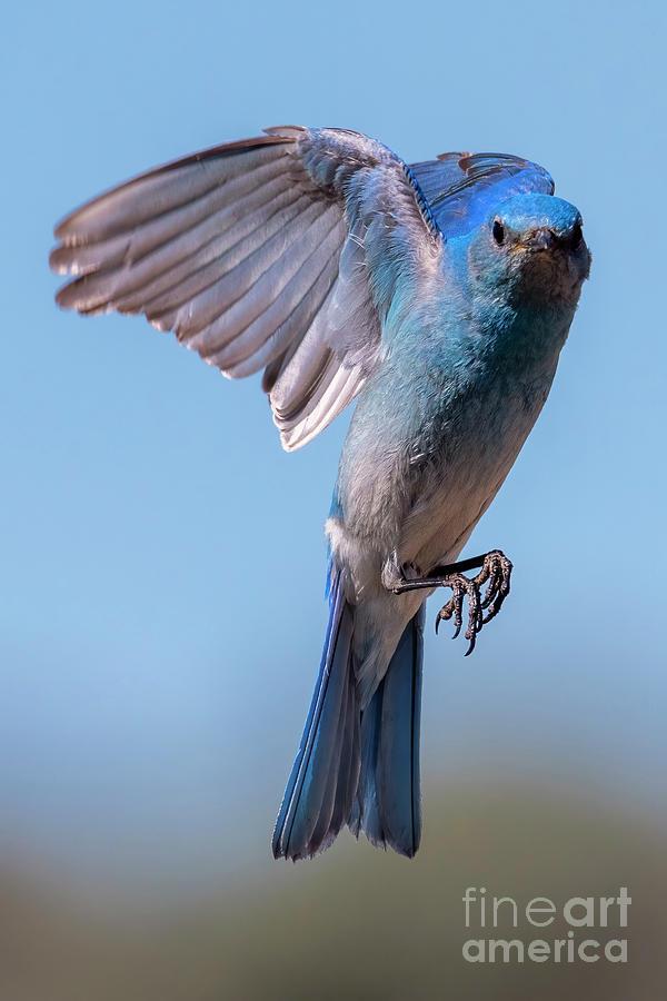 Blue Angel Photograph