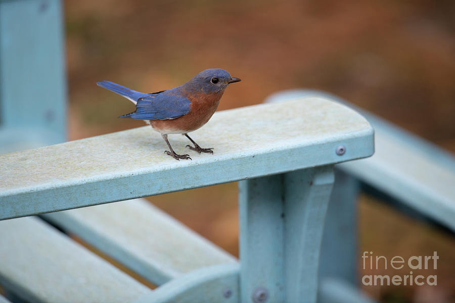 Blue Bird Resting Place Photograph