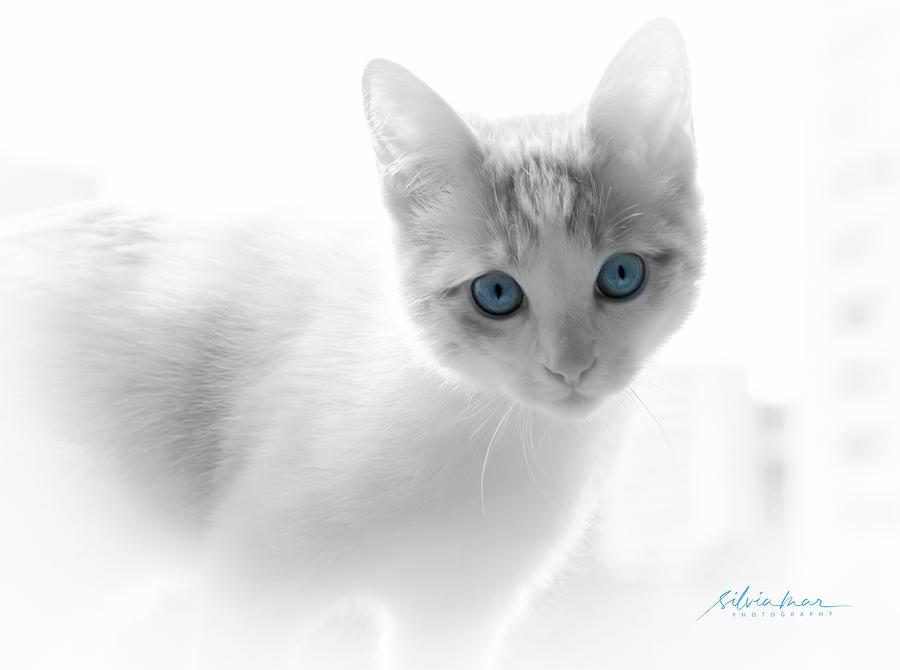 Blue eyes by Silvia Marcoschamer