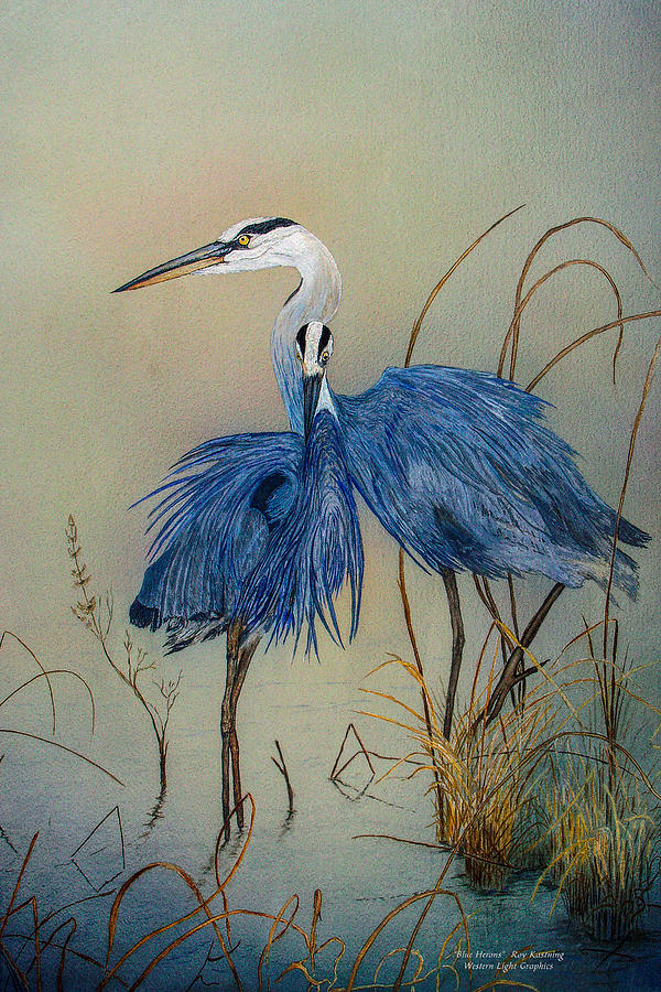 Blue Herons by Roy Kastning