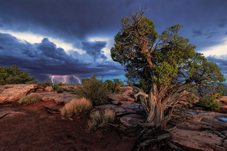 Blue Hour At Dead Horse Point Photograph