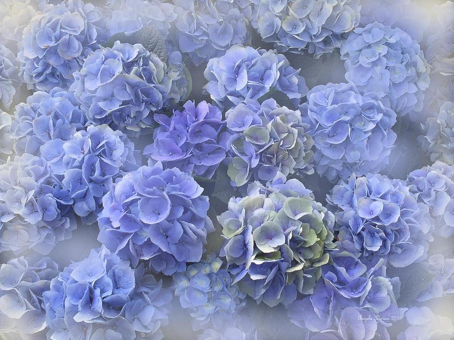 Blue Hydrangeas  by Angela Davies