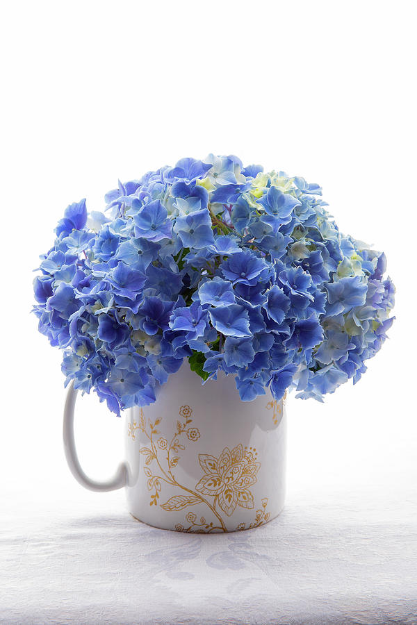 Blue Hydrangeas In Mug Photograph