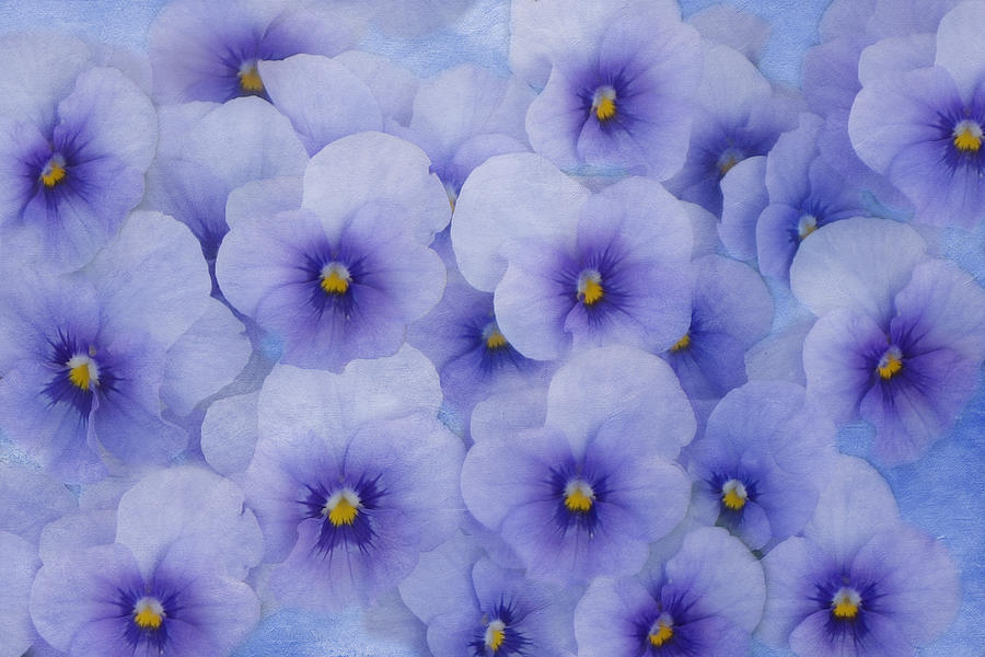 Pansy Photograph - Blue Painted In Blue by Isabela and Skender Cocoli