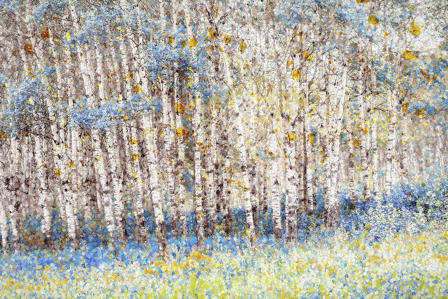 Blue Poplars Photograph