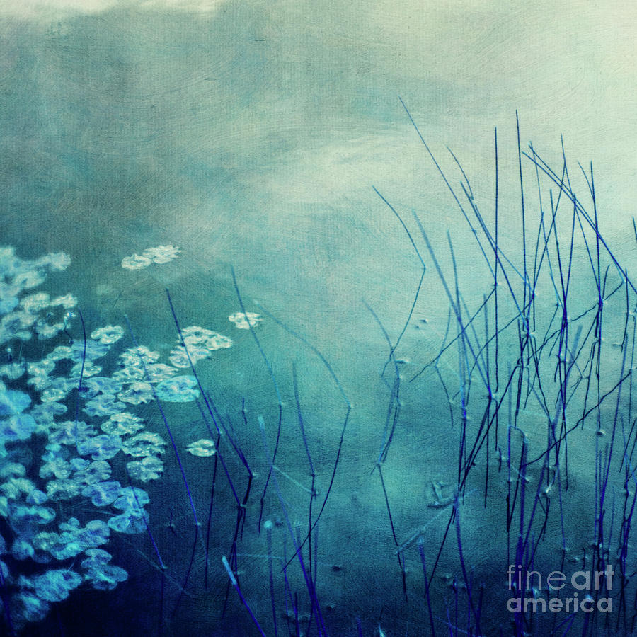 blue reeds by Priska Wettstein