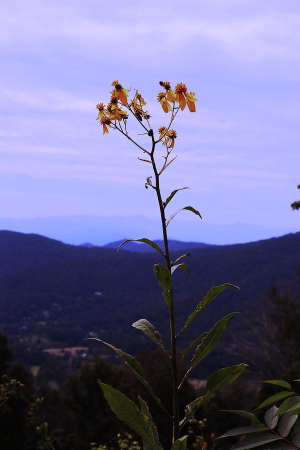 Blue Ridge Mt. Overlook Photograph