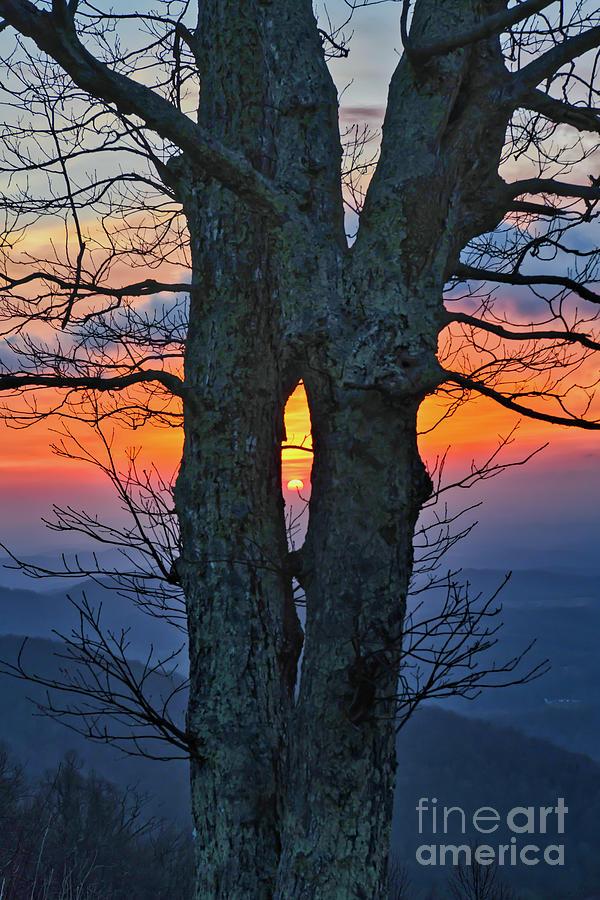 Blue Ridge Parkway Sunrise - Through The Tree Photograph