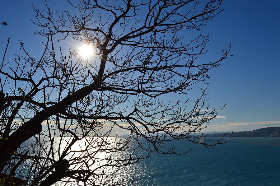 BLUE SEA by Thomas Schroeder