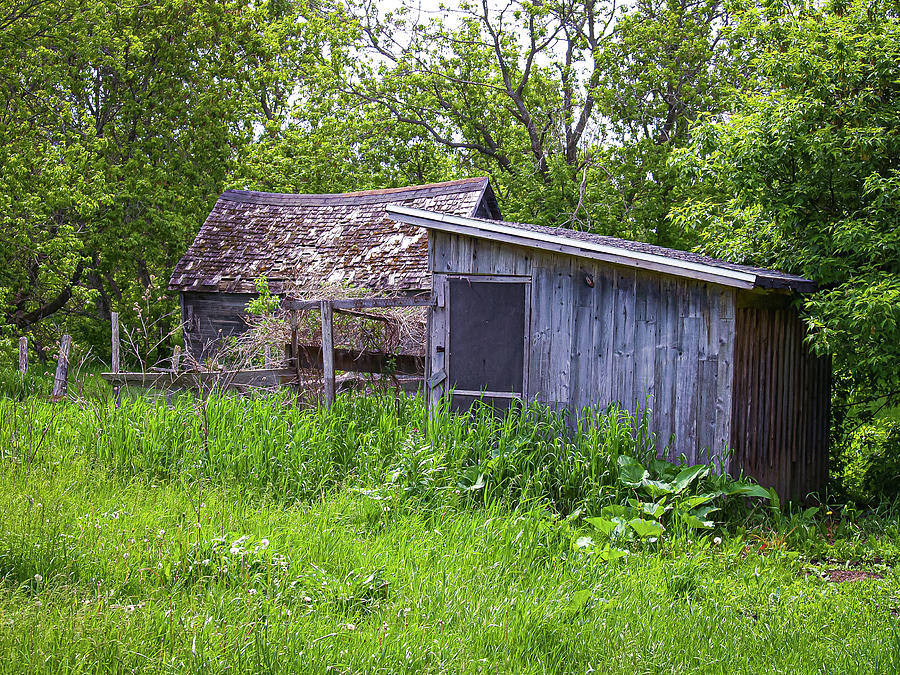 Blue Shed Photograph
