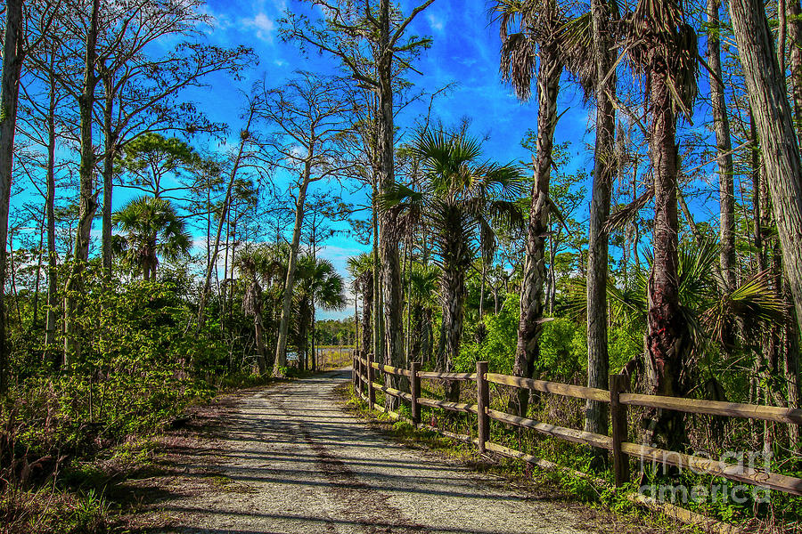 Blue Sky Hiking Trail by Tom Claud