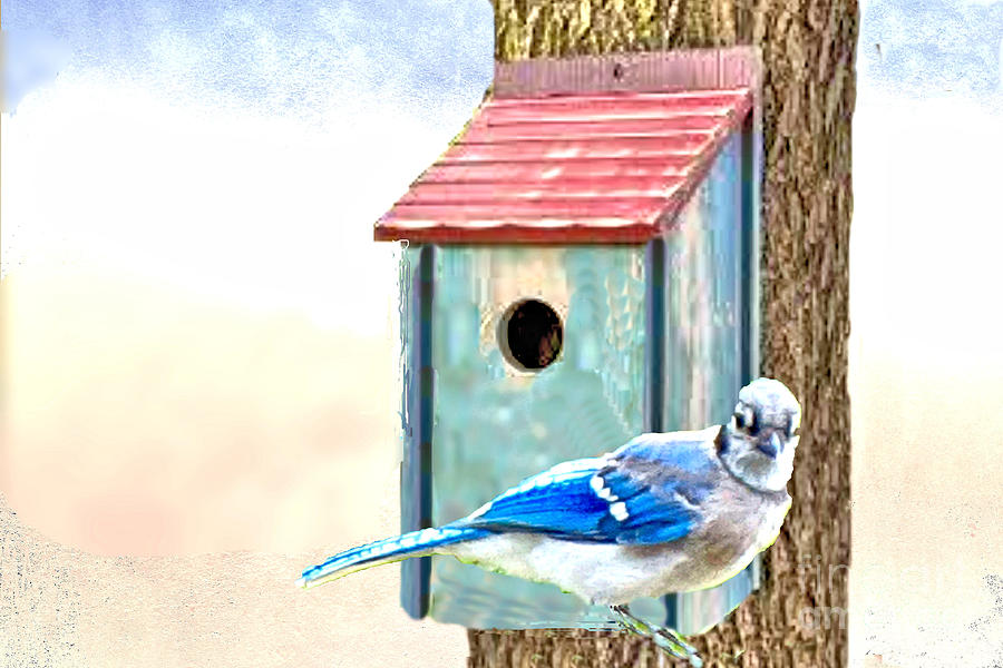 Bluebird and Birdhouse by Janette Boyd