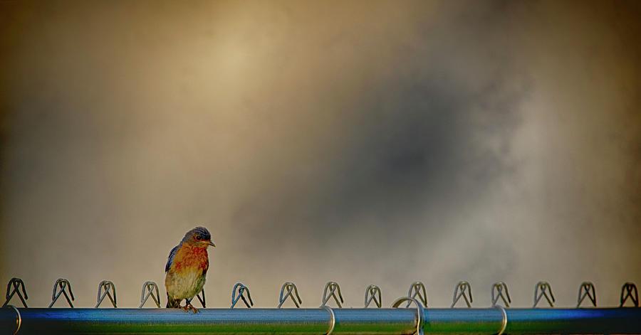 Bluebird Photograph - Bluebird of Joy by Jim Cook