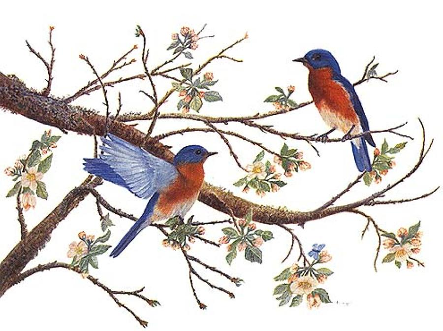 Bluebirds Painting - Bluebirds And Apple Blossoms by Ben Kiger