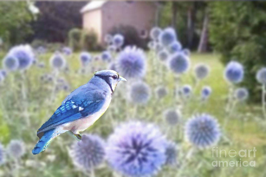 Bluejay in Echinops by Janette Boyd