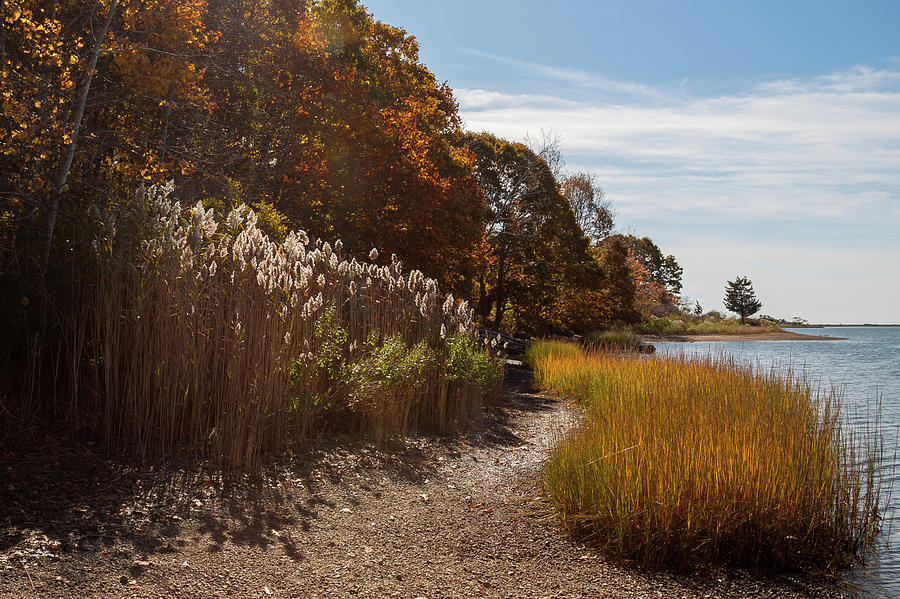 Bluff Point Stroll by Kirkodd Photography Of New England