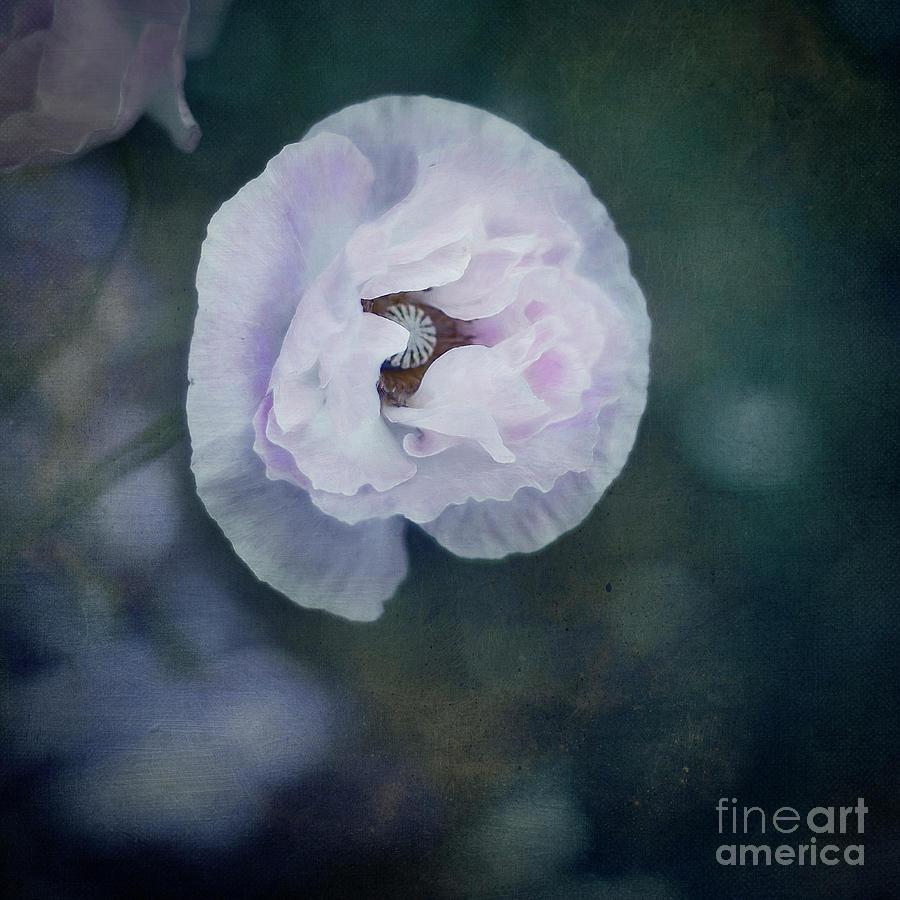Blushing by Priska Wettstein