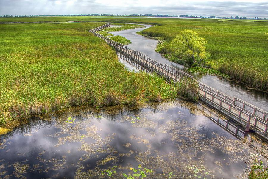 Boardwalk over Marsh Photograph by Eden Watt