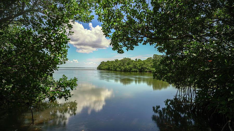 Boca Grande Mangrove View Photograph