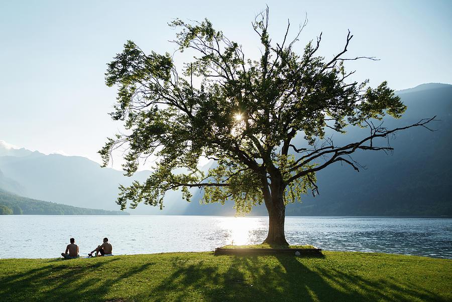 Bohinj Tree in summer by Ian Middleton