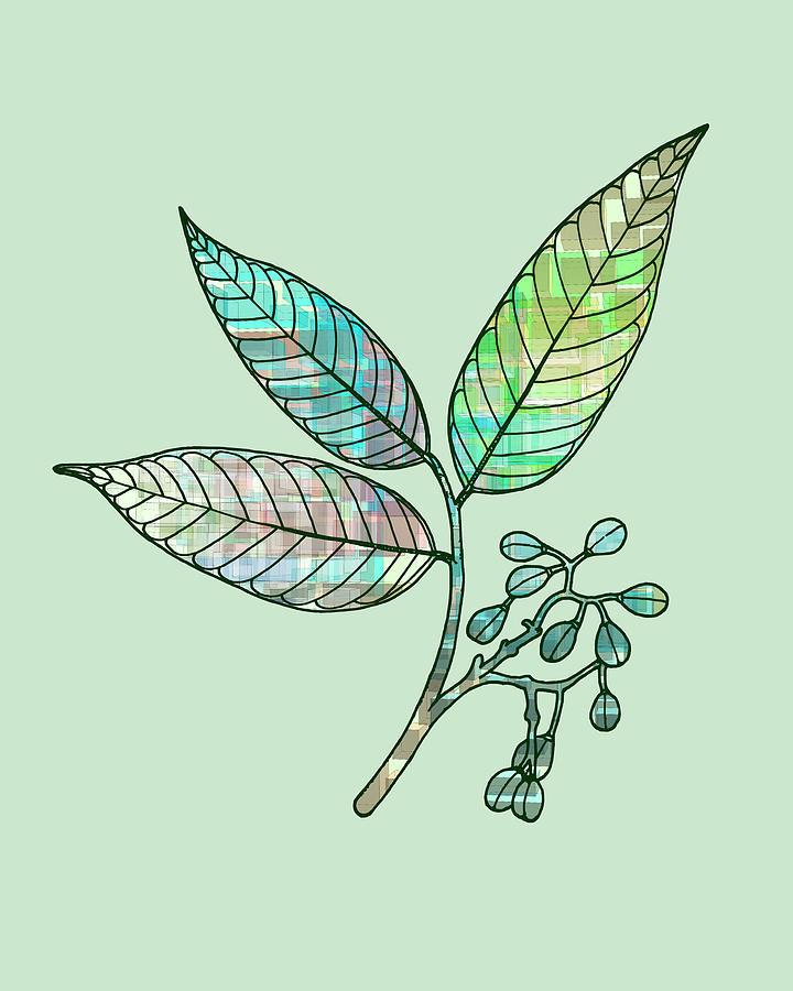 Boho Botanic Leaves Illustration Digital Art