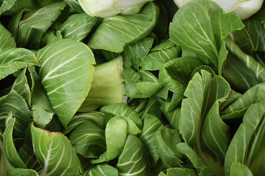 Vegetables Photograph - Bok Choy by D Patrick Miller