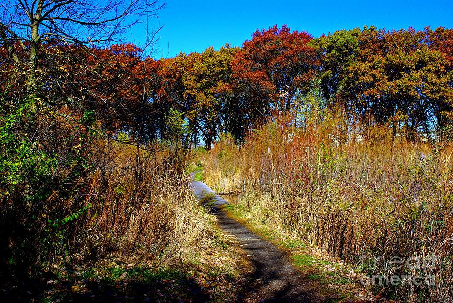 Nature Photograph - Bold Colors Down the Trail by Frank J Casella