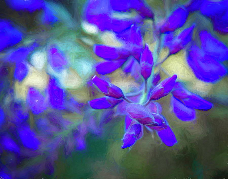 Wisteria Buds Dressed In Bold Colors Photograph By Lindsay Thomson