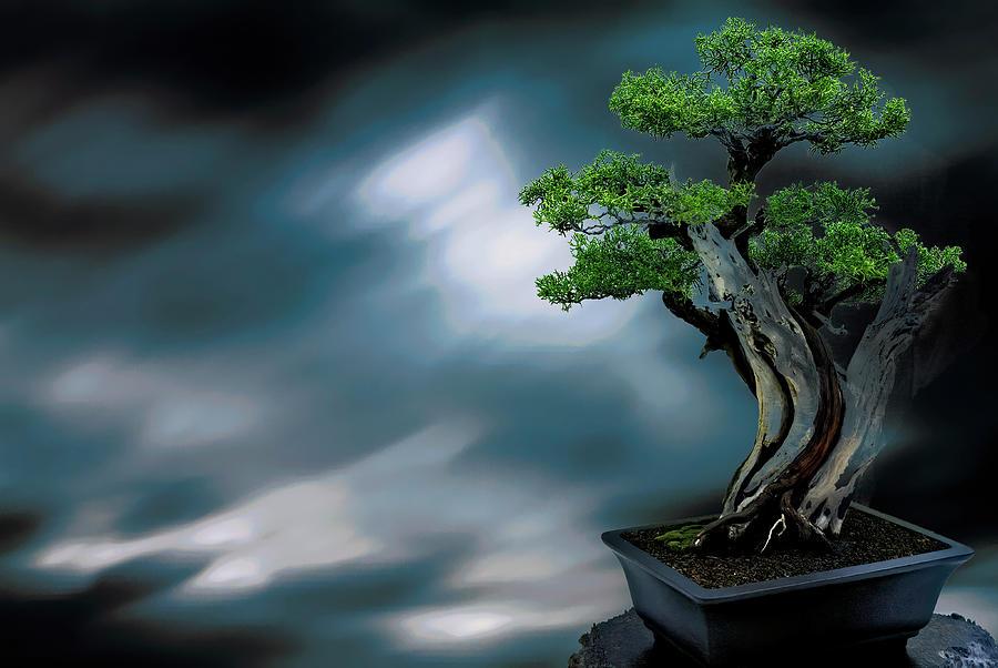 Bonsai by PAUL COCO