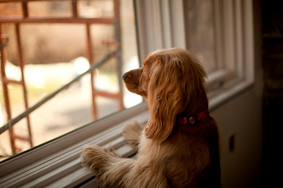 Boots at the window Photograph by Christopher Drost