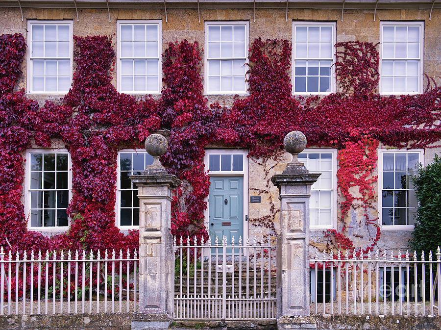 Boston Ivy on a Broadway House Cotswolds by Tim Gainey